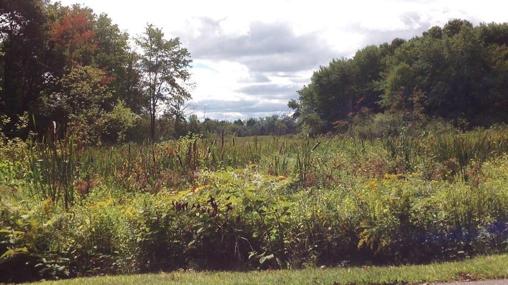 Boston's Brook Farm 2